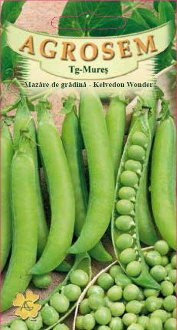Seminte de Mazare de gradina Kelvedon Wonder - AS - Pisum sativum