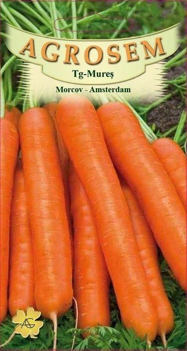 Seminte de Morcov Amsterdam - AS - Daucus carota