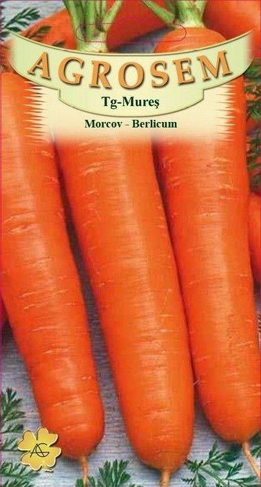 Seminte de Morcov Berlicum - AS - Daucus carota