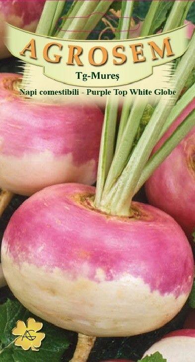 Seminte de Napi comestibili Purple Top White Globe - AS - Brassica rapa