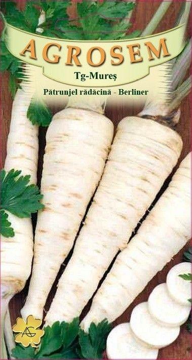 Seminte de Patrunjel radacina Berliner - AS -  Petroselinum crispum convar. radicosum