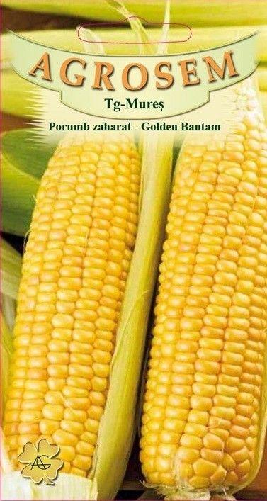 Seminte de Porumb zaharat Golden Bantan - AS - Zea mays convar. sacharata