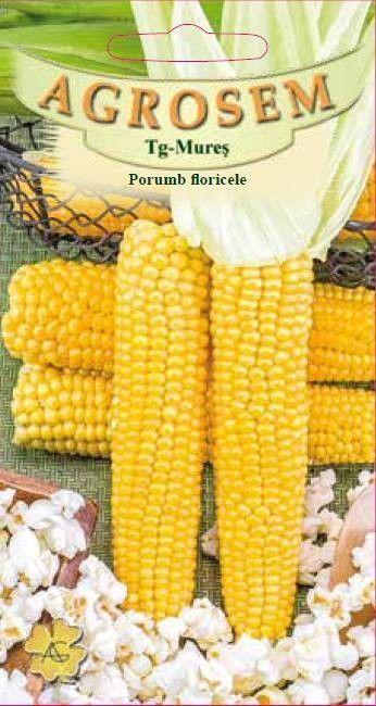Seminte de Porumb floricele Popcorn - AS - Zea mays convar. everta