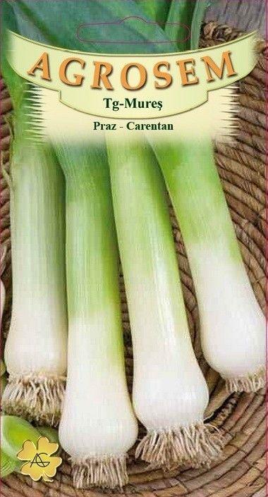 Seminte de Praz Carentan- AS - Allium porrum