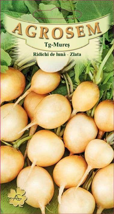Seminte de Ridichi de luna Zlata - AS - Raphanus sativus var. sativus