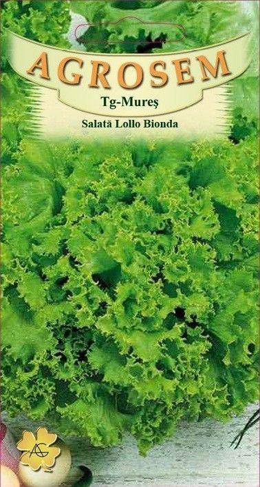 Seminte de Salata creata Lollo Bionda - AS - Lactuca sativa