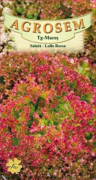 Seminte de Salata creata rosie Lollo Rossa - AS - Lactuca sativa