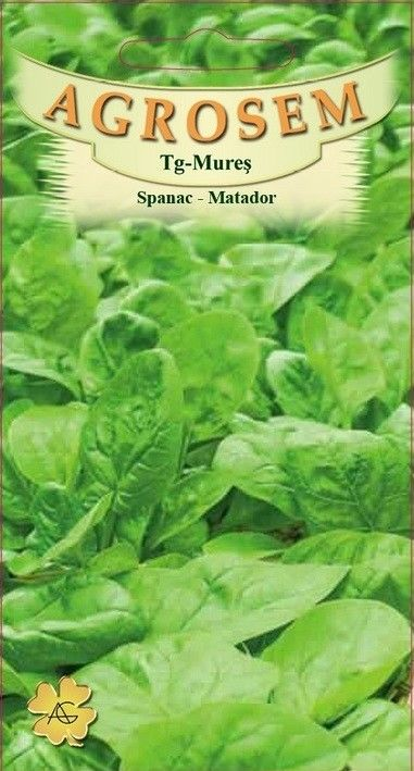Seminte de Spanac Matador - AS - Spinacea oleracea