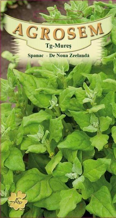 Seminte de Spanac de Noua Zeelanda - AS - Tetragonia expansa