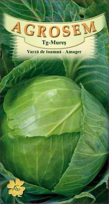 Seminte de Varza de toamna Amager - AS - Brassica oleracea var. capitata