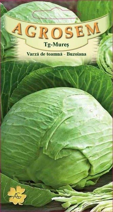 Seminte de Varza de toamna Buzoiana - AS - Brassica oleracea var. capitata