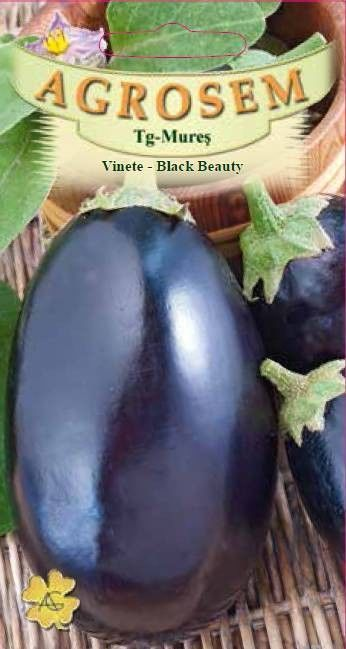 Seminte de Vinete Black Beauty - AS - Solanum melongena