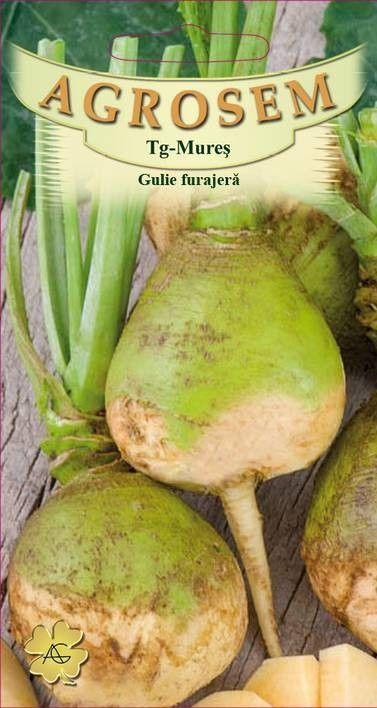Seminte de Gulie furajera Wilhemsburger - AS - Brassica napus var. napobrassica