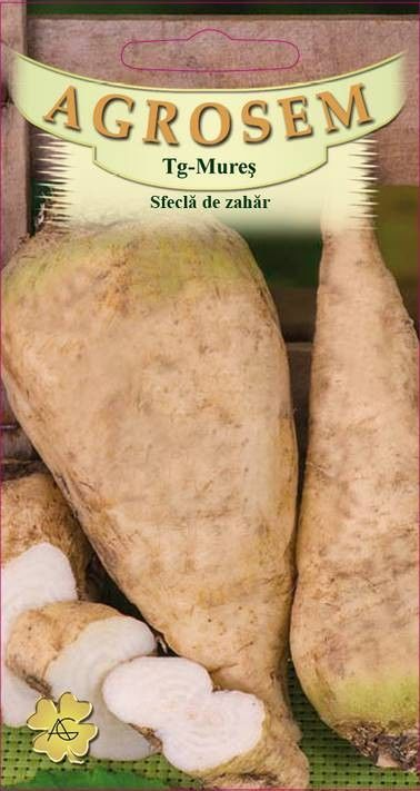 Seminte de Sfecla de zahar Semizuccherina - AS - Beta vulgaris saccharifera