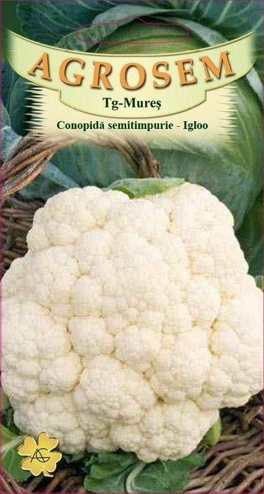 Seminte de Conopida semitimpurie Igloo - BigPack - AS - Brassica oleracea var. botrytis