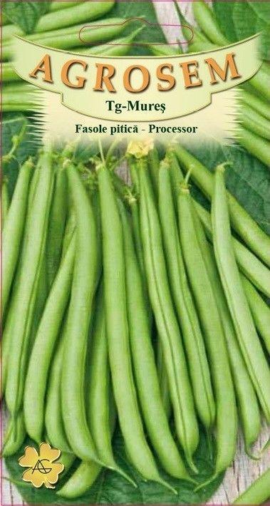 Seminte de Fasole pitica Processor - 50 g - AS - Phaseolus vulgaris var. nanus