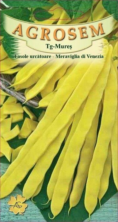Seminte de Fasole urcatoare Meraviglia di Venezia - 50 g - AS - Phaseolus vulgaris var. vulgaris