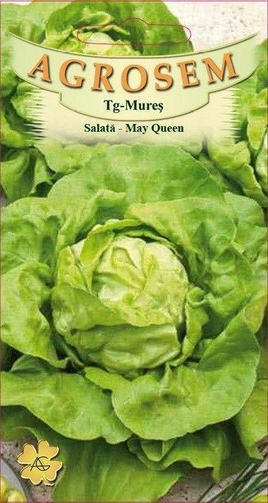 Seminte de Salata May Queen - Big Pack - AS - Lactuca sativa