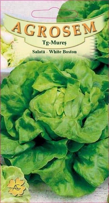 Seminte de Salata White Boston - Big Pack - AS - Lactuca sativa