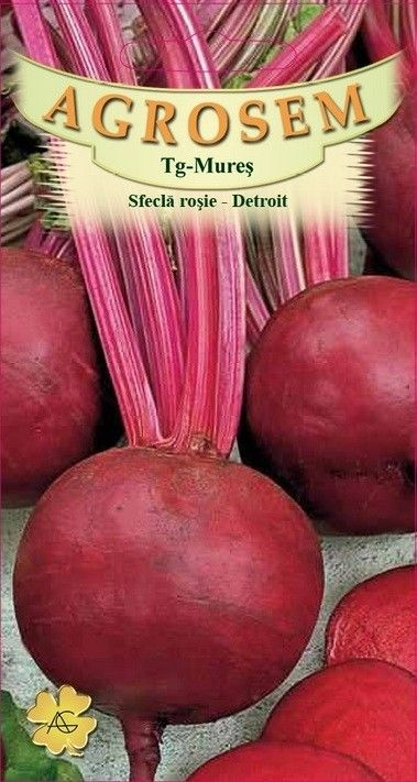 Seminte de Sfecla rosie Detroit 30 g - Big Pack - AS - Beta vulgaris var. conditiva