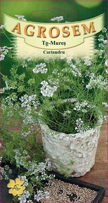 Seminte de Coriandru - AS - Coriandrum sativum
