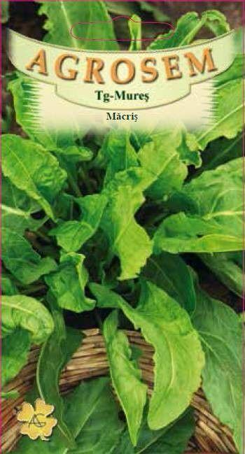 Seminte de Macris - AS - Rumex acetosa