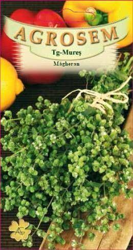 Seminte de Magheran - AS - Majorana hortensis
