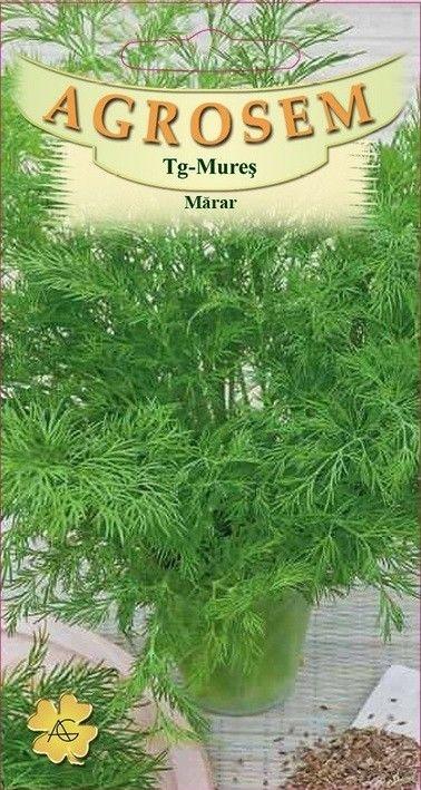 Seminte de Marar - AS - Anethum graveolens