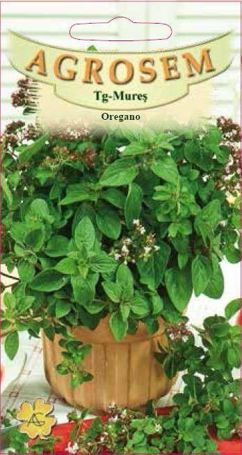 Seminte de Oregano - AS - Origanum vulgare