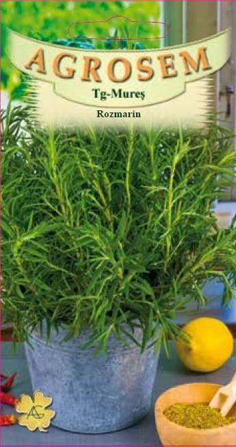 Seminte de Rozmarin - AS - Rosmarinus officinalis