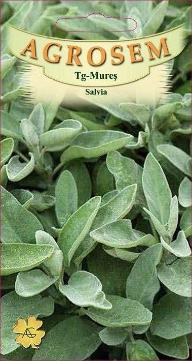 Seminte de Salvia - AS - Salvia officinalis