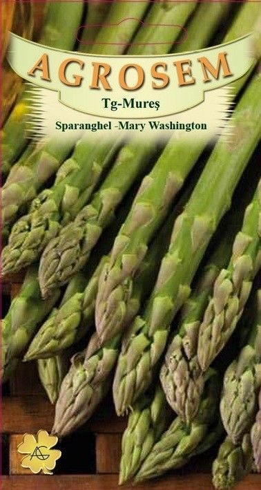 Seminte de Sparanghel Mary Washington - AS - Asparagus officinalis