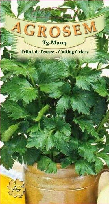 Seminte de Telina de frunze - AS - Apium graveolens convar. dulce