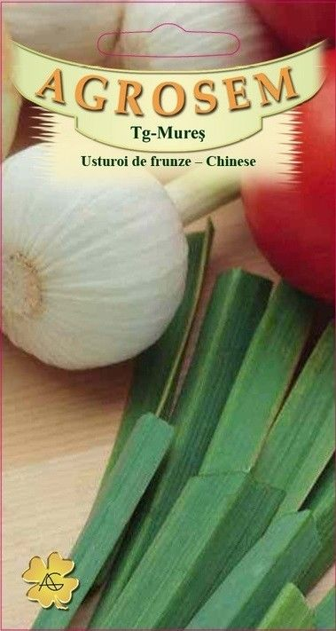 Seminte de Usturoi de frunze - AS - Allium tuberosum