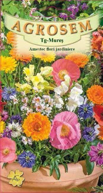 Seminte de Amestec flori jardiniere - AS