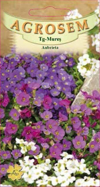 Seminte de Aubrieta - AS - Aubrieta hybrida