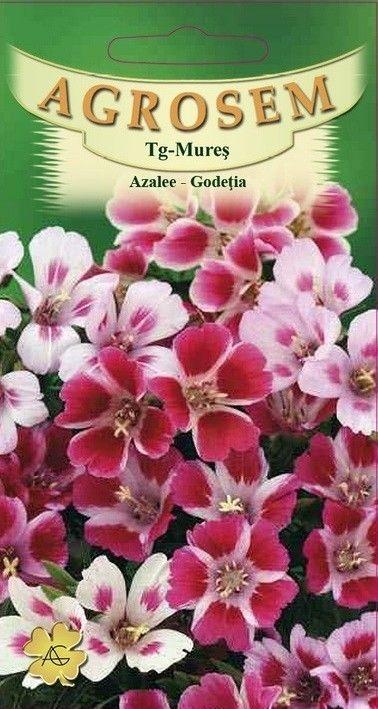 Seminte de Azalee mix - AS - Godetia grandiflora