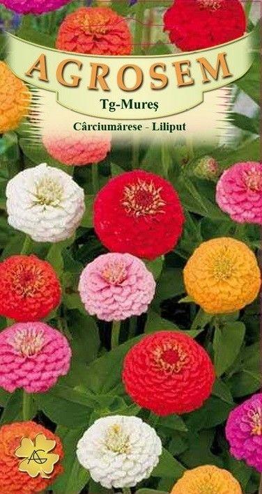 Seminte de Carciumarese Liliput mix- AS - Zinnia elegans