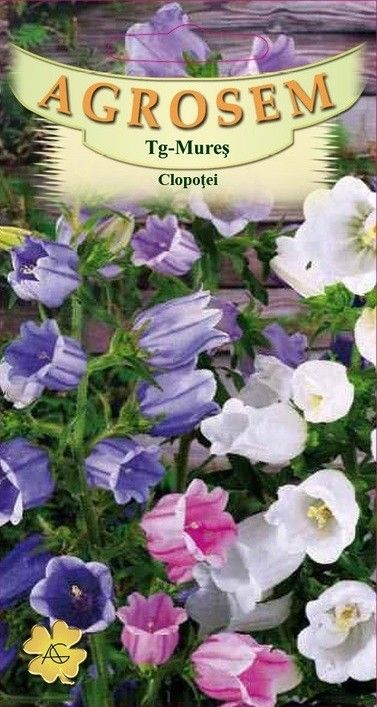 Seminte de Clopotei mix - AS - Campanula medium