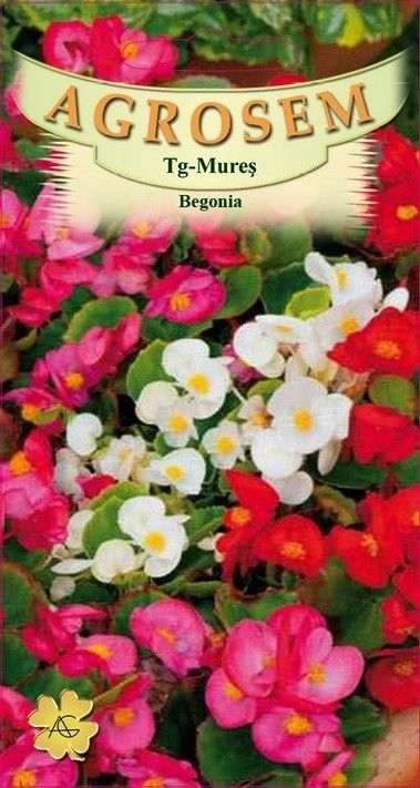 Seminte de Begonia mix - AS - Begonia semperflorens