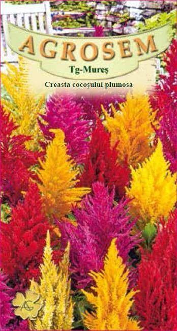 Seminte de Creasta cocosului mix- AS - Celosia argentea var. plumosa