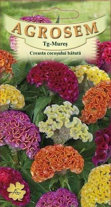 Seminte de Creasta cocosului batuta mix - AS - Celosia argentea cristata nana