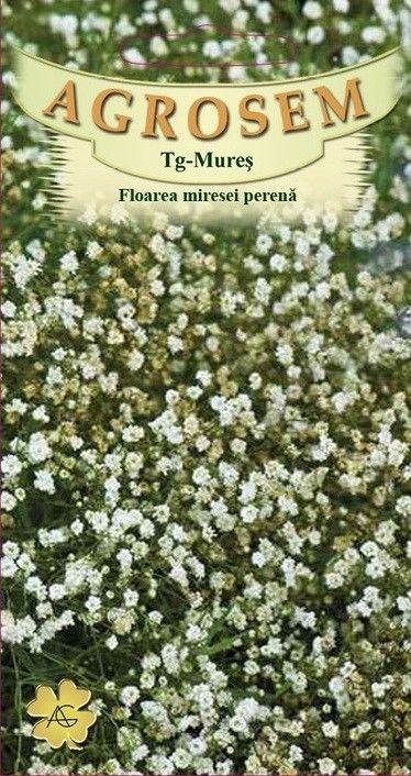 Seminte de Floarea miresei perena alba - AS - Gypsophila paniculata