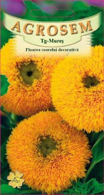 Seminte de Floarea soarelui decorativa Double - AS - Helianthus annuus