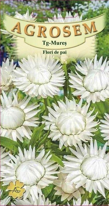 Seminte de Flori de pai albe - AS - Helichrysum bracteatum
