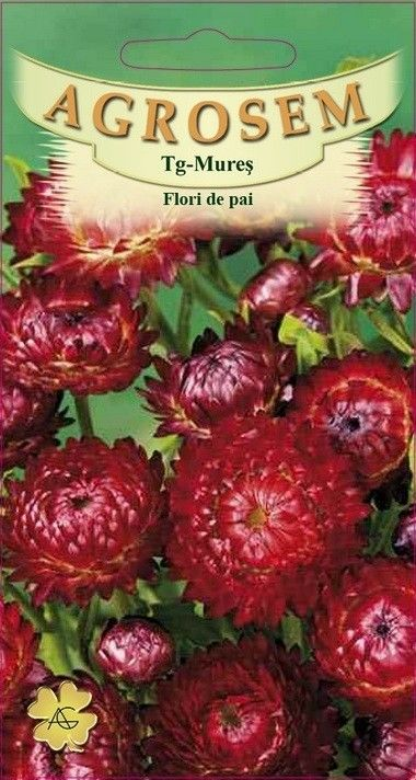 Seminte de Flori de pai rosii - AS - Helichrysum bracteatum