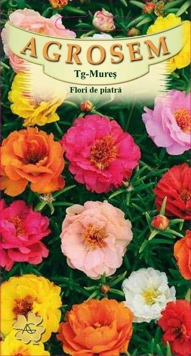 Seminte de Flori de piatra mix- AS - Portulaca grandiflora