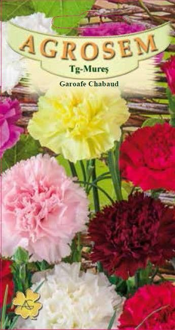 Seminte de Garoafe Chabaud mix - AS - Dianthus caryophyllus