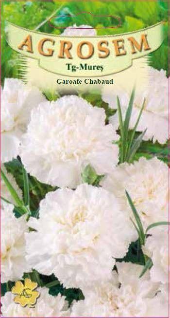 Seminte de Garoafe Chabaud albe - AS - Dianthus caryophyllus
