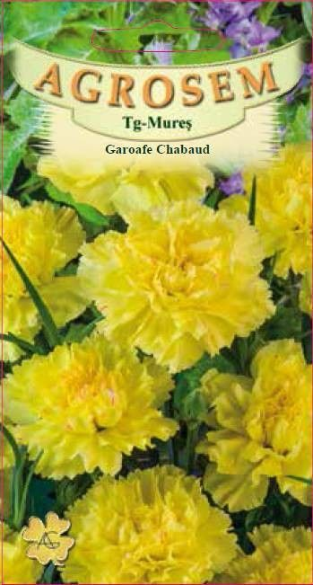 Seminte de Garoafe Chabaud galbene - AS - Dianthus caryophyllus